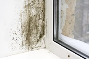 Mold Removal Portland